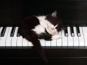 Piano_ 02.jpg